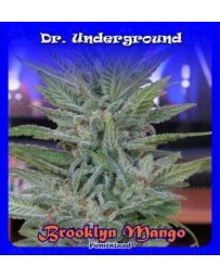 Brooklyn Mango Dr. Underground