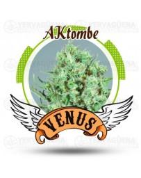 AKtombe Venus Genetics