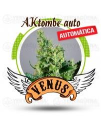 AKtombe Venus Genetics autofloreciente
