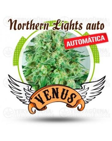 Northern Lights Venus Genetics autofloreciente