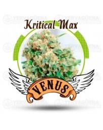 Kritical Max Venus Genetics