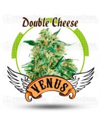 Double Cheese Venus Genetics