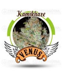 Kamikhaze Venus Genetics