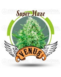 Super Haze Venus Genetics