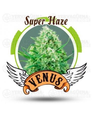 Super Haze Venus Genetics