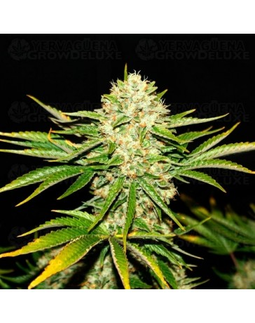 Wreckage T.H. Seeds