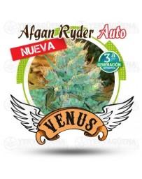 Afgan Ryder auto Venus Genetics autofloreciente