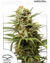 Auto White Widow Dutch Passion Autofloreciente