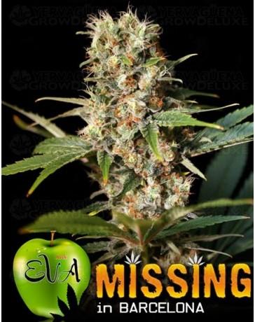 Missing in Barcelona Eva Seeds