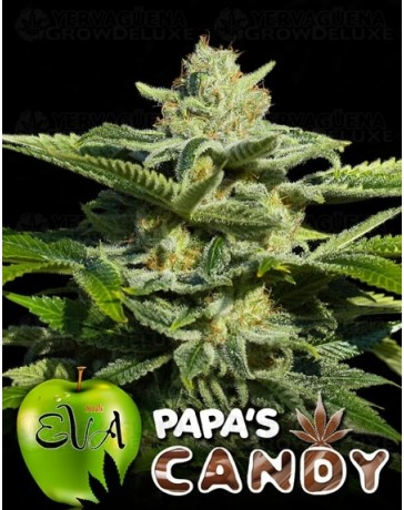 Papa's Candy (Eva Seeds)