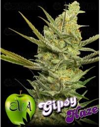 Gipsy Haze Eva Seeds