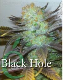Black Hole Elite Seeds