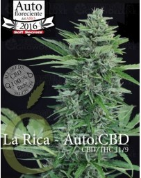 La Rica auto CBD Elite Seeds