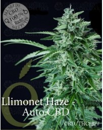 Llimonet Haze auto CBD Elite Seeds