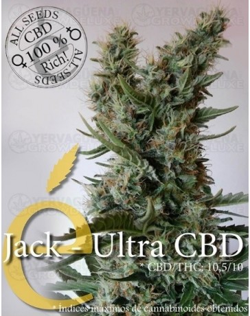 Jack Ultra CBD Elite Seeds