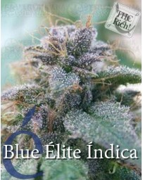 Blue Elite Indica Elite Seeds