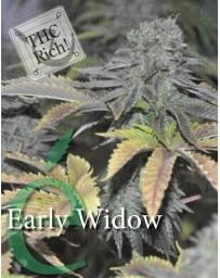 Early Widow Elite Seeds