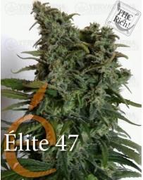 Elite 47 Elite Seeds