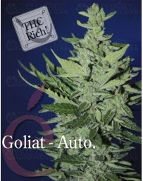 Goliat auto Elite Seeds