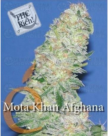 Mota Khan Afghana Elite Seeds