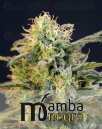 Mamba Negra Faminizada de BlimBurn