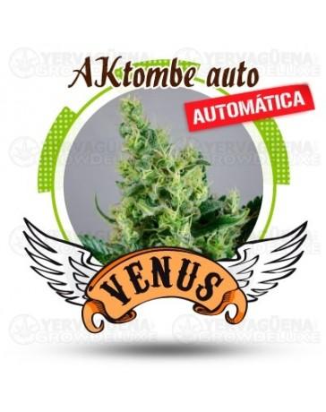 AKtombe Venus Genetics autofloreciente Outlet