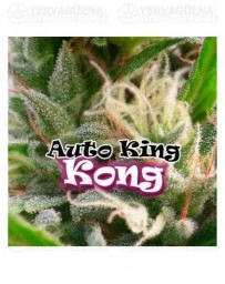 Auto King Kong Dr. Underground