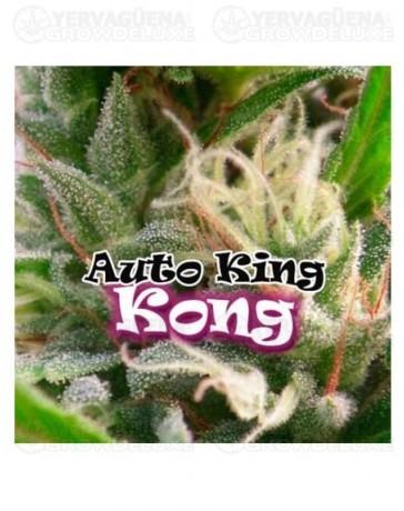 auto-king-kong-dr-underground