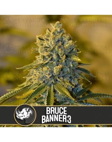 Bruce Banner #3 BlimBurn