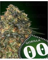 Gorilla 00 Seeds