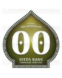 Female Collection #4 00 Seeds