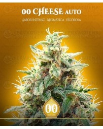 00 Cheese Auto 00 Seeds Autofloreciente