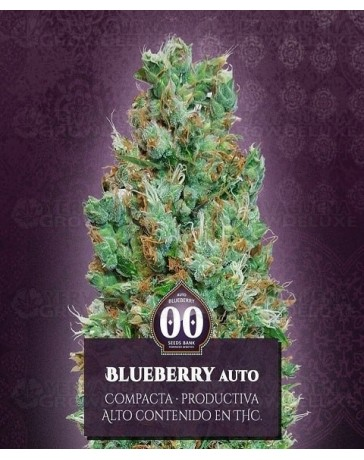 Auto Blueberry 00 Seeds Autofloreciente