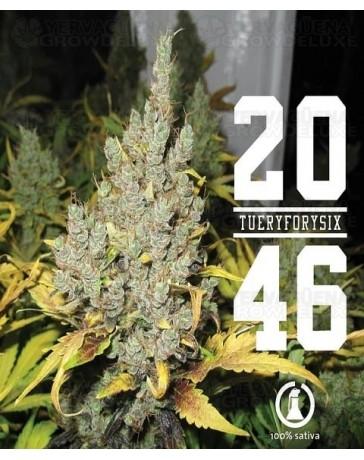 2046 Medical Seeds