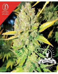 Devil Fruit Medical Seeds