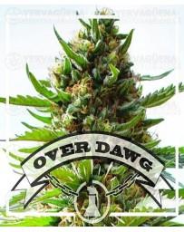 Over Dawg  Medical Seeds