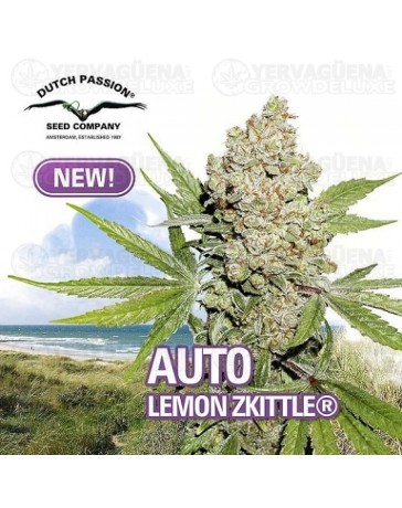 Auto Lemon Zkittle Dutch Passion Autofloreciente