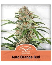 Auto Orange Bud Dutch Passion Autofloreciente