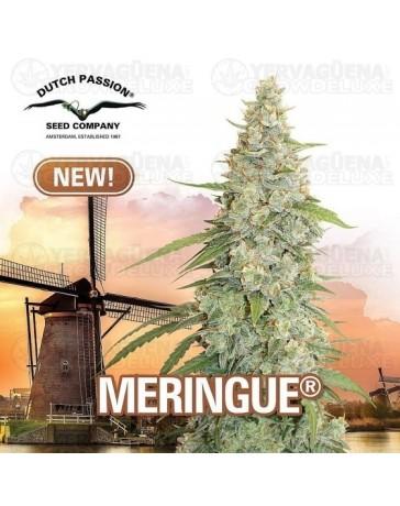 Meringue Dutch Passion