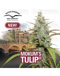 Mokum's Tulip Dutch Passion