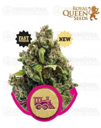 Candy Kush Express Fast Version Royal Queen