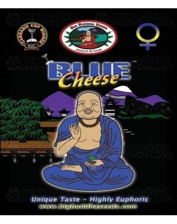Blue Cheese Big Buddha Seeds