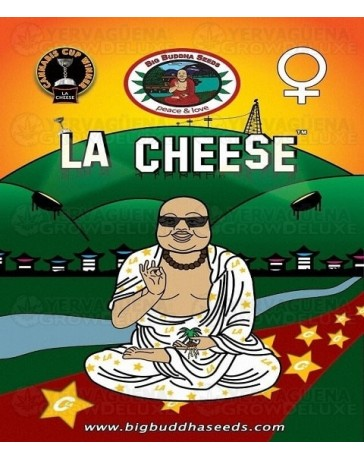 L.A. Cheese Big Buddha Seeds