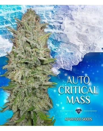 Auto Critical Mass Advanced Seeds