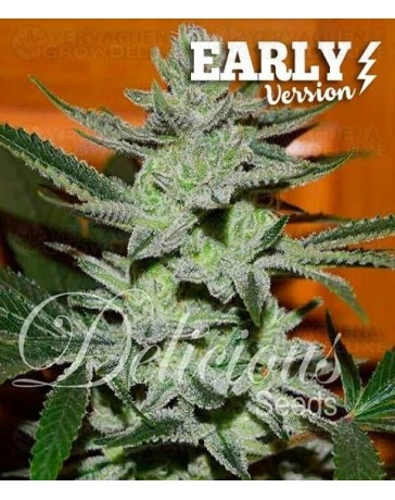 Unknown Kush Early Version Delicious Seeds