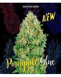 Pineapple Glue Advanced Seeds