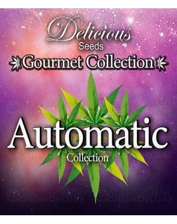 Gourmet Collection Auto 1 Delicious Seeds Autofloreciente