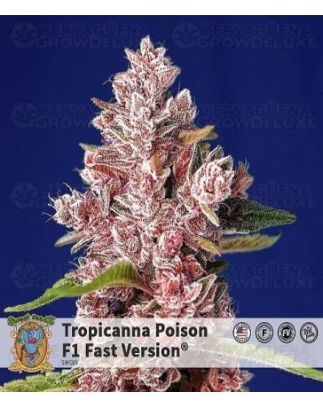 Tropicanna Poison F1 Fast Version Sweet Seeds