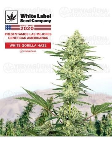 White Gorilla Haze White Label