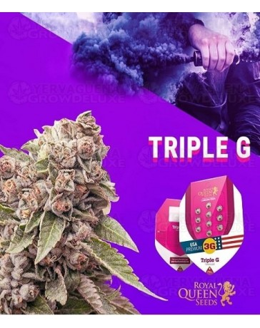 Triple G Royal Queen